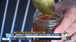 marriott-marquis-using-urban-bee-hives-for-honey