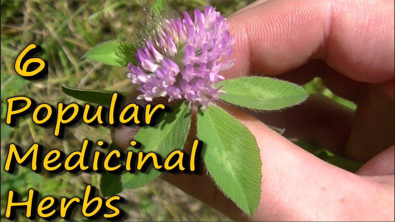 Midwest Medicinal Plants Identify Harvest And Use 109 Wild Herbs For Health Wellness Lisa M Rose 9781604696554 S