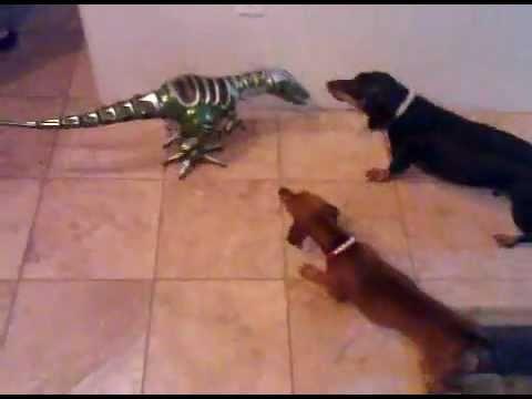 Weiner Dogs attack GODZILLA!