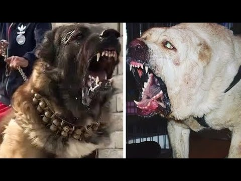 DOG BREEDS With The STRONGEST BITE