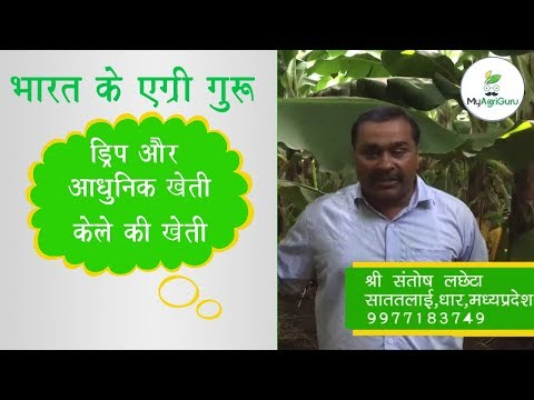 AgriGurus of India | Scientific and Technical way of Banana farming |