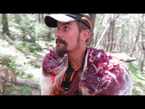NSW Deer Opening Success (Fallow, Pigs & Wriggle Sticks)