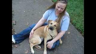 Sam Good Dog Rescue