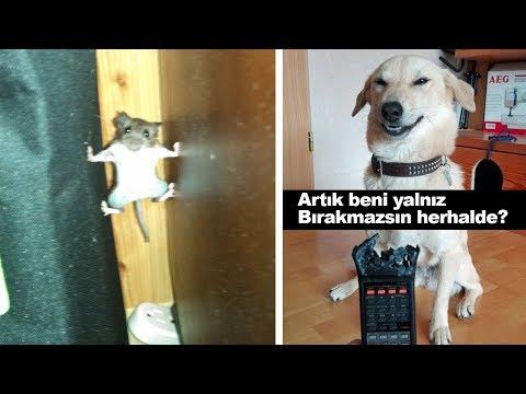 Muhtemelen Kahkaha Atacağınız Komik Hayvan Paylaşımları