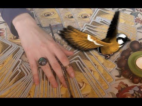 [ASMR] Flying Bird Tarot Card Spread - A Reading to Lift Your Spirit