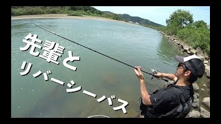 釣りの先輩とリバーシーバス! 編【mania fishing TVコラボ】