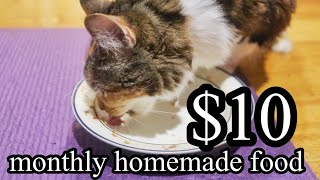 How to make Homemade Cat Healthy FOOD Monthly under $10