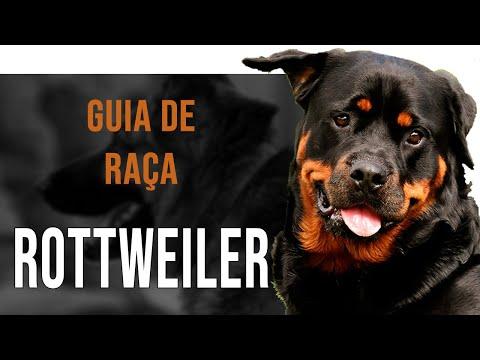ROTTWEILER – Tudo sobre a raça