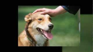 Dog Trainer Portland Oregon - Call 503.799.1443 Professional Dog Training Services