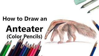 How to Draw a Anteater with Color Pencils [Time Lapse]