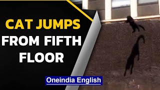 Cat escapes burning building, jumps from 5th floor, lands smoothly & goes viral | Oneindia News