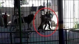 Domador morre após ser atacado por um leão em uma apresentação no Egito