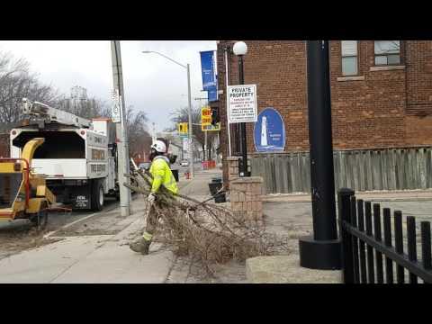 Large tree slams into building - James ST N Hamilton Ontario