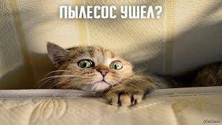 Кот vs Пылесос???Смешные кошки приколы про кошек и котов 2017