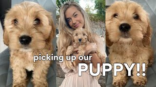 PICKING UP OUR PUPPY (i.e the best day of my life)