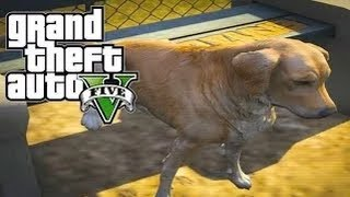 Gta 5 Mods - Pet Mods / Golden Retriever - Chop Reskin