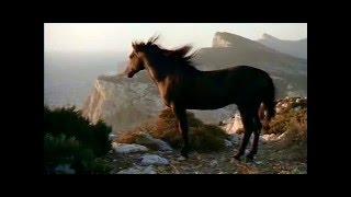 """Казачья песня """"Конь"""" (""""На рассвете..."""") Дмитрия Шведа и Ларисы Черниковой"""
