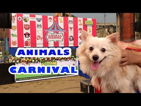 ANIMAL CARNIVAL IN KOLKATA 26th NOVEMBER 2017