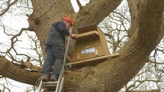 How to Erect a Barn Owl Nestbox in a Tree