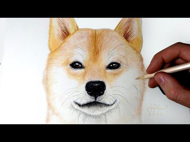 Comment dessiner un Chien Shiba Inu [Tutoriel]