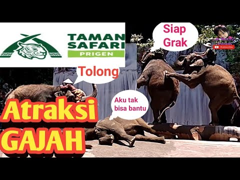 hebohnya-nonton-dari-dekat-atraksi-gajah-sumatera-|-taman-safari-prigen-pasuruan-(part-1)