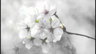 春の花と「荒城の月」
