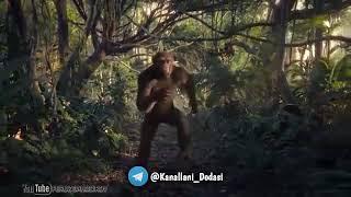 Обезьяна танцует