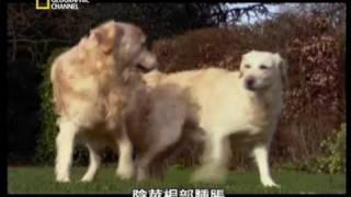国家地理频道 01子宫内日记:犬科动物篇 thumbnail