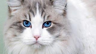 лучшие приколы с кошками видео