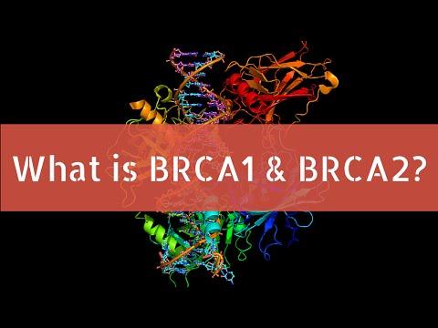 Poliklinika Harni - Veći rizik za karcinom endometrija kod žena s  BRCA1 mutacijom
