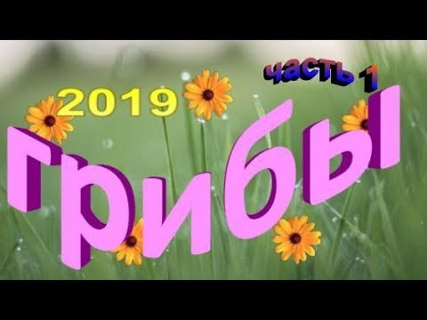 #первыегрибы Первые грибы 2019. когда начинается грибной сезон в ленинградской области (часть 1)