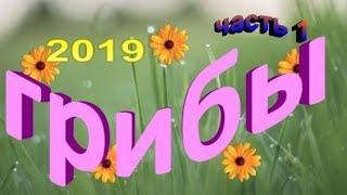 Грибы 2019! Когда начинается грибной сезон в Ленинградской области .(часть 1)