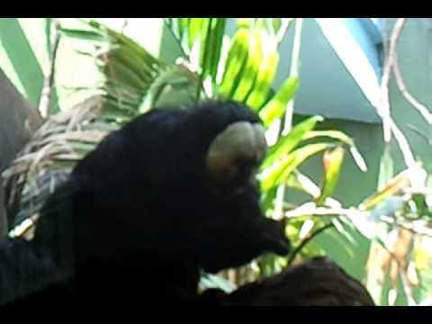 Bravo monkey eating