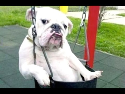 Funny Dogs - A Funny Dog Videos Compilation 2015 from YouTube · Duration:  6 minutes 1 seconds
