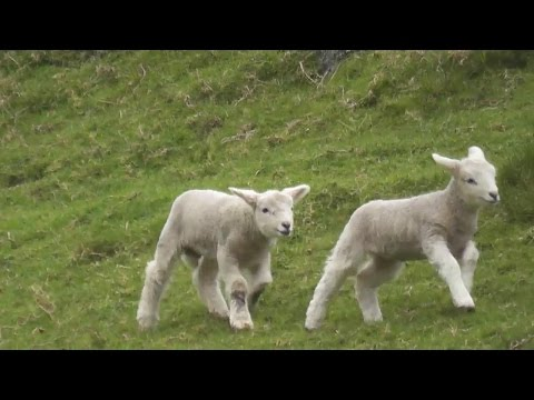 Katie Sommers - TECO Energy Brings Back The LAMB CAM To Apollo Beach