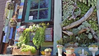 Succulent cafe in Oceanside California