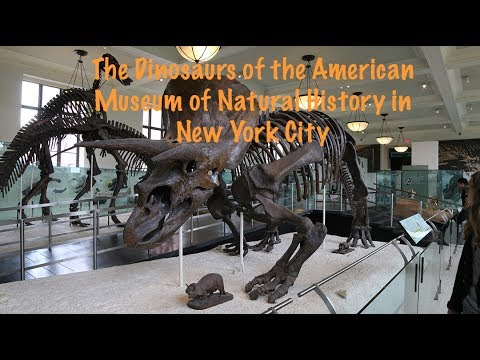The Dinosaurs Of The American Museum In New York City