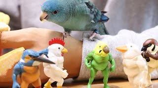Mustle Birds Collection Capsule Toy