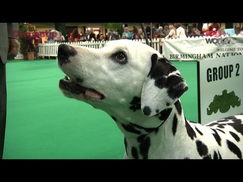 Birmingham National 2016 Dog Show - Utility group Shortlist