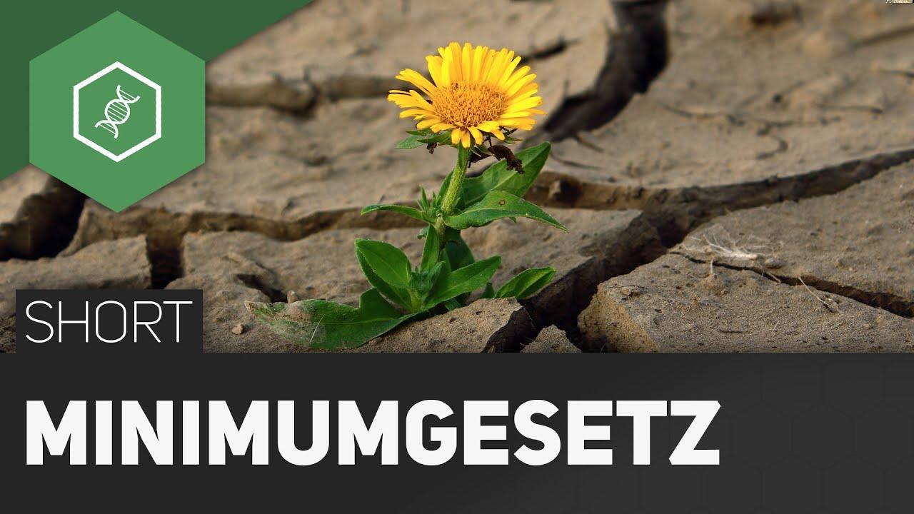 Minimumgesetz - Wie wachsen Pflanzen am Besten? - YouTube