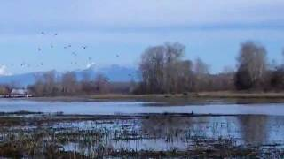 Dizzy on zoom in the Big Billy Ladner swamp trail with wintering bi...