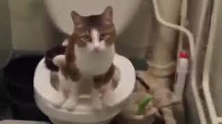 Прикольный кот (Робот перевод)