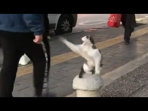 Stray Cat Sits on Sidewalk and Attacks Pedestrians - 1121609-1