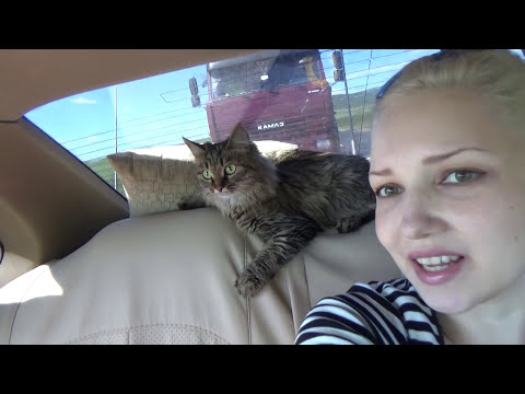 ВЛОГ Мы едем в Краснодар на машине с кошкой !!!