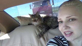 ВЛОГ Мы едем в Краснодар на машине с кошкой !!!(ВЛОГ Мы едем в Краснодар на машине с кошкой !!! Не судите строго-мы только учимся снимать семейные видео...., 2016-07-03T14:08:37.000Z)