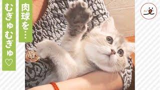via Instagram@cat_deborkader https://www.instagram.com/cat_deborkad...