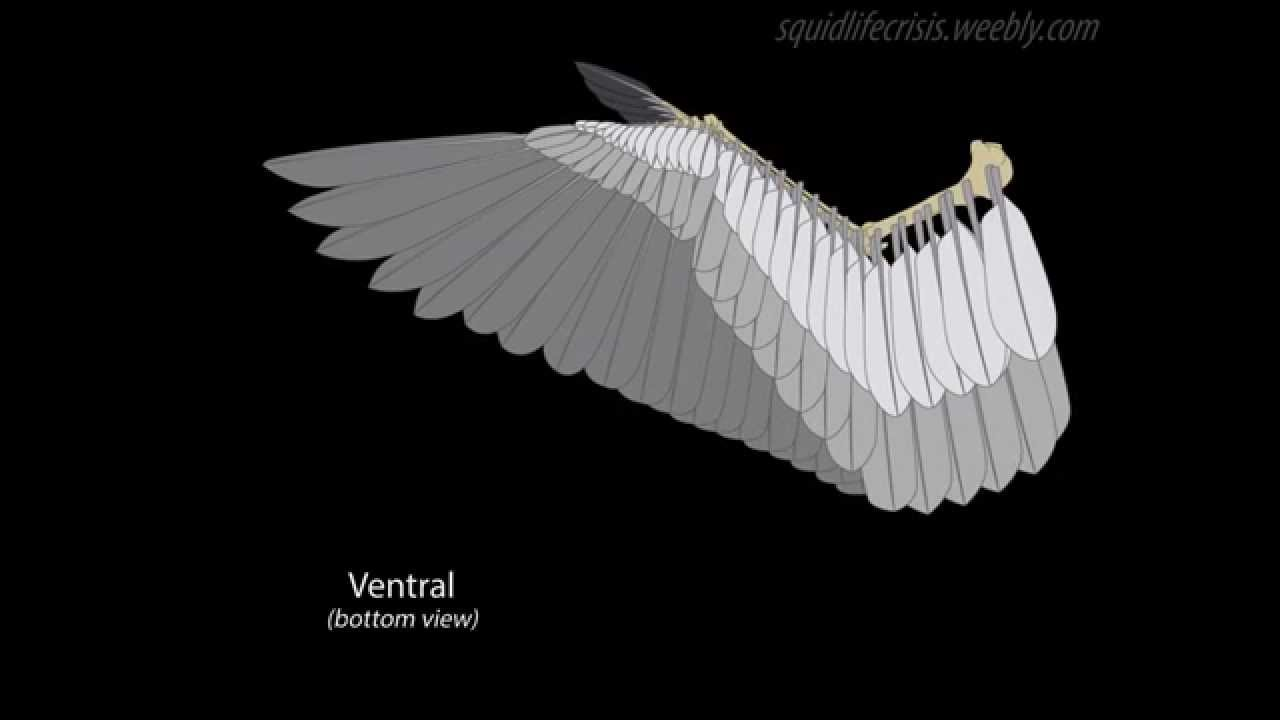 animated feathered wings