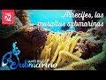 Arrecifes, las murallas submarinas
