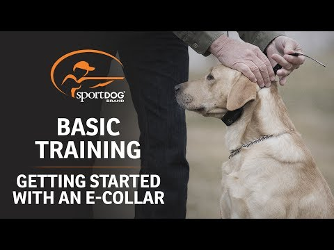 basic-training-::-getting-started-with-an-e-collar