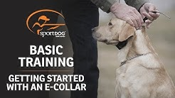 Basic Training :: Getting Started with an E-Collar